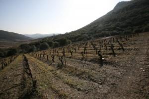 Mas Coris - Les vignes et le paysage