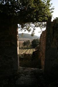 Mas Coris - Les vignes vues à travers une porte en ruine