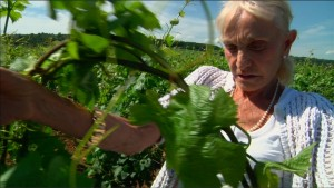 A Year in Burgundy - Lalou Bize-Leroy dans ses vignes