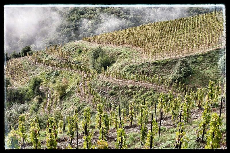 Les vignes de l'appellation Cornas en terrasses
