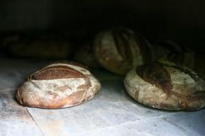 Pains dans le four à bois du Mas Sibert à Fos, Hérault